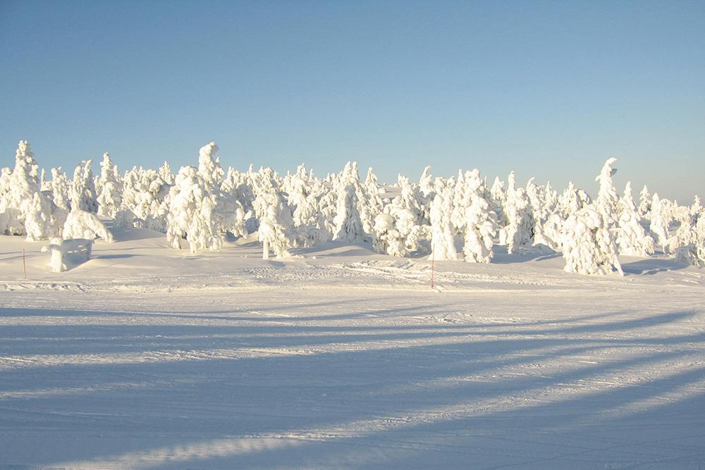 snow-tress